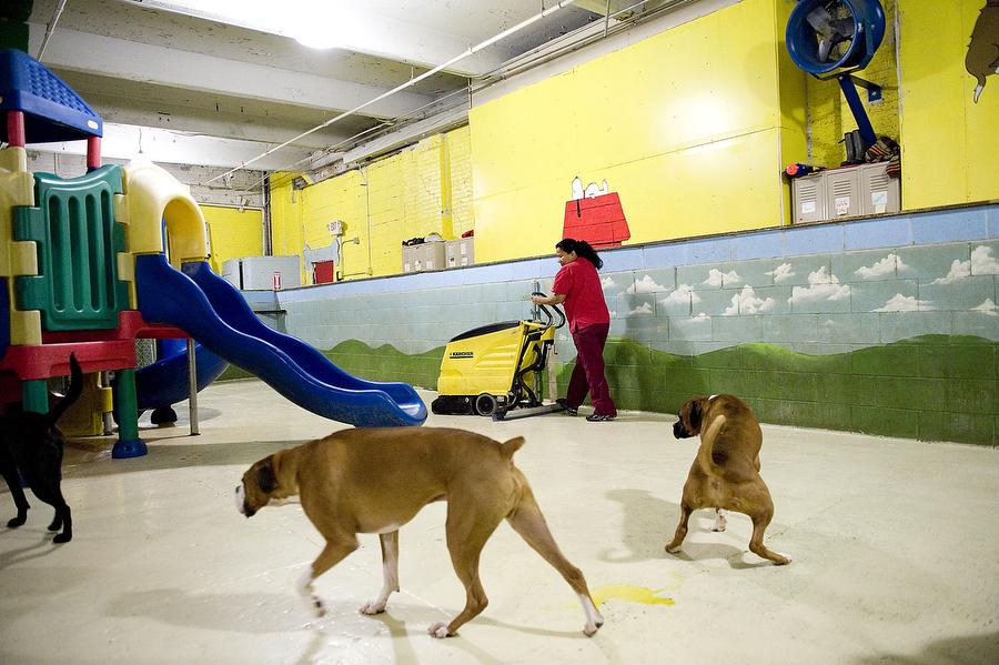 Best Dog Boarding In Jersey City